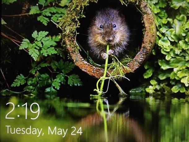 Beaver_on_Twitter.jpb