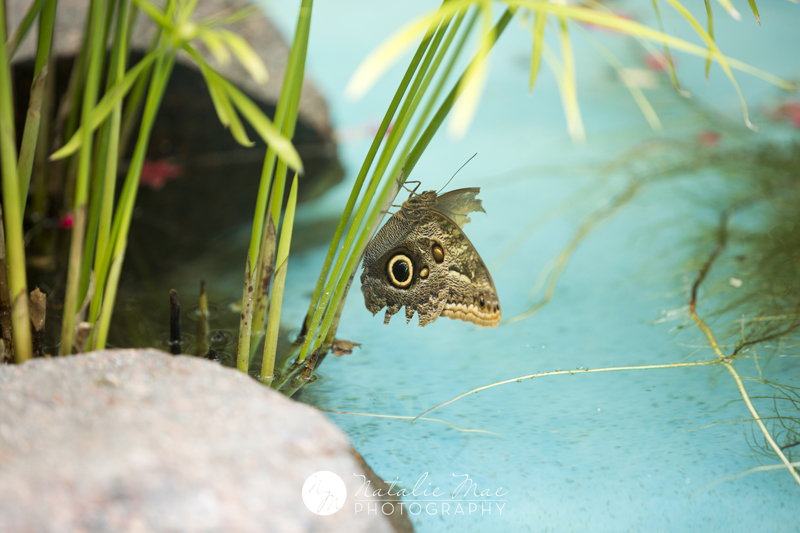 I almost missed this guy in the butterfly house, he blended really well with the rocks in the background.