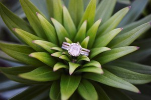 Beautiful wedding ring photographed in the center of a beautiful succulent plant