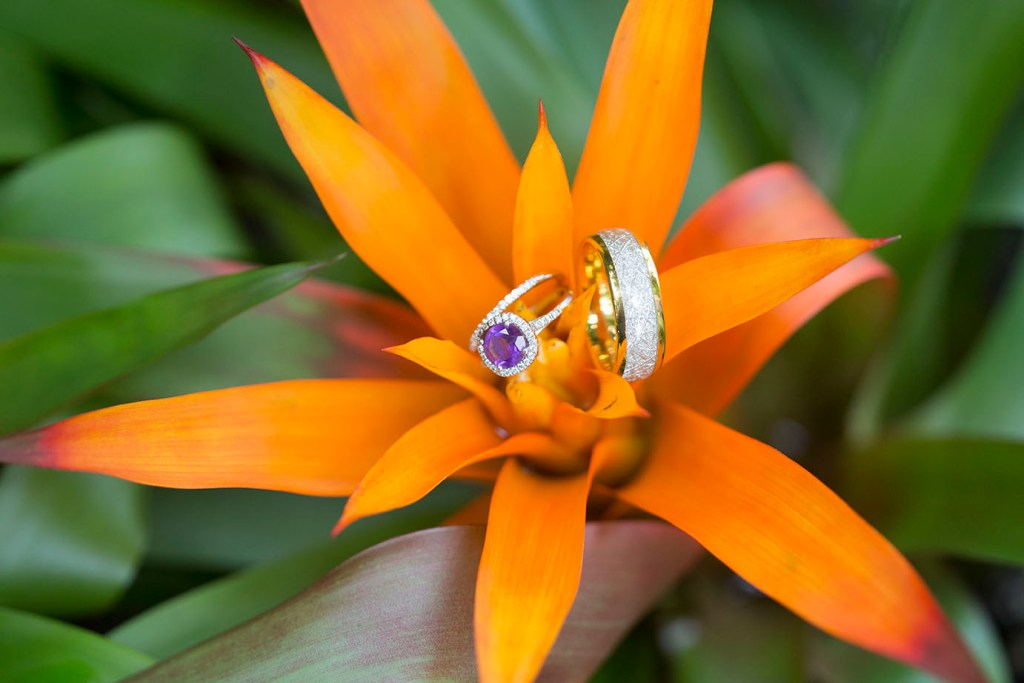 Purple wedding ring resting on a Bromelaid