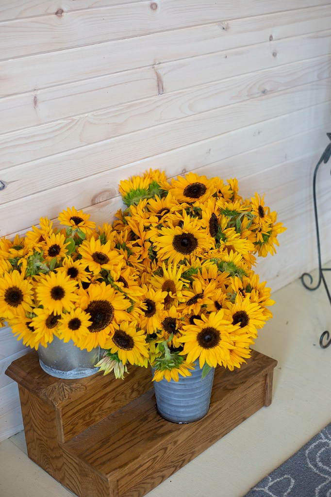 Buckets of sunflowers from Piggly Petals Flower Farm