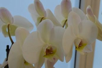Praxis Raum Blume