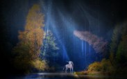 unicorn-1999549_1920