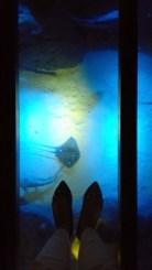 Ada lantai transparan, dan ikan pari bisa lewat-lewat di bawah saya