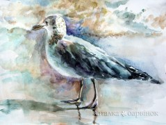 Seagull. Watercolor, paper