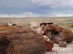 big-pieces-of-petrified-wood-springerville