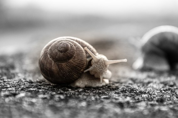 a-to-z-challenge-2017-travel-epiphanies-natasha-musing-W-walk-of-wisdom-snail2
