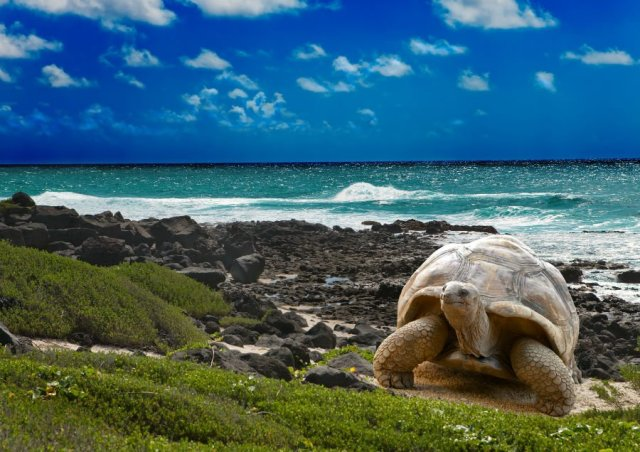 a-to-z-challenge-2017-travel-epiphanies-natasha-musing-Y-yonder-and-beyond-tortoise