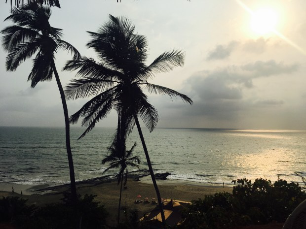 Thursday-tree-love-goa-coconut tree