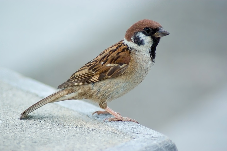 Sparrow Day: #WordlessWednesday