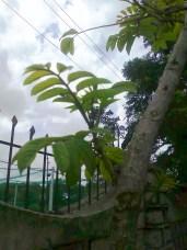 photo1540_001