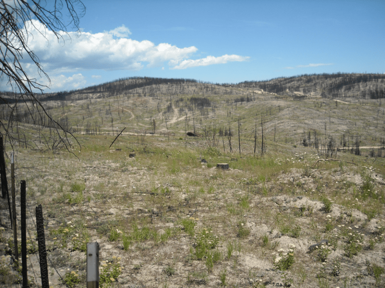 One year after postfire logging on a site that burned during the 2014 Carlton Fire in Washington. (Credit: D. W. Peterson)