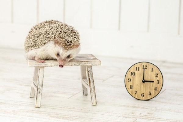 ハリネズミと時計