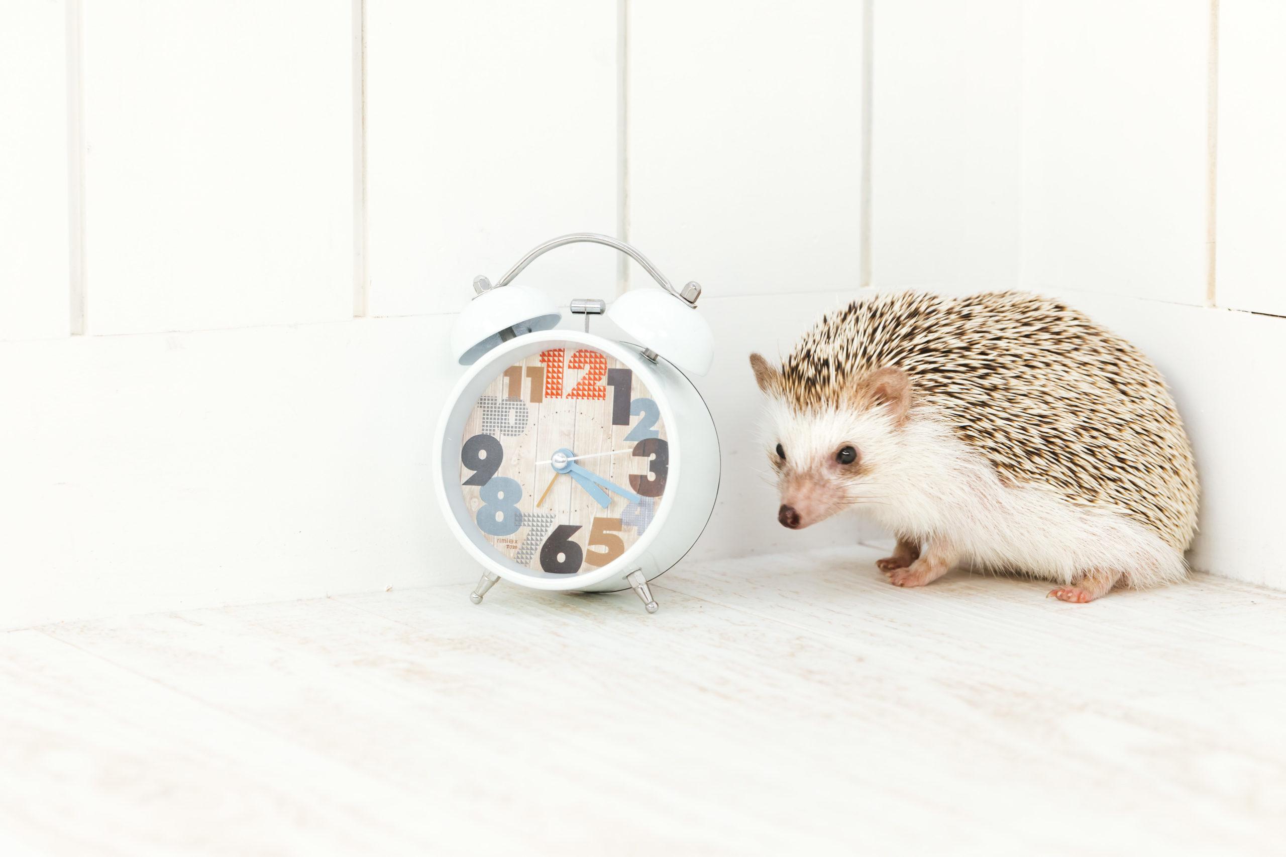 ハリネズミと時計2