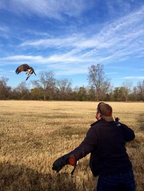 falconry-1-2016