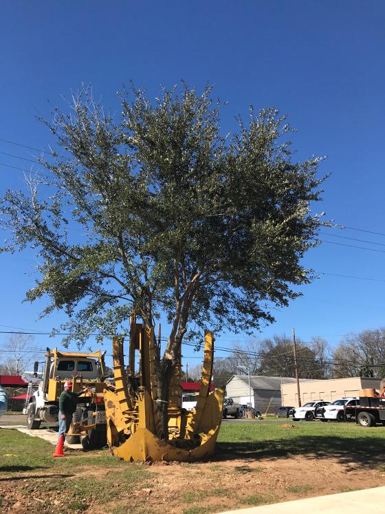 tree-preservation_0049