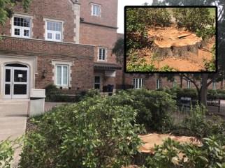 NSU Russell Hall Tree Cut Down