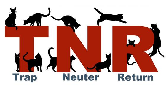 NHS TNR Program.png