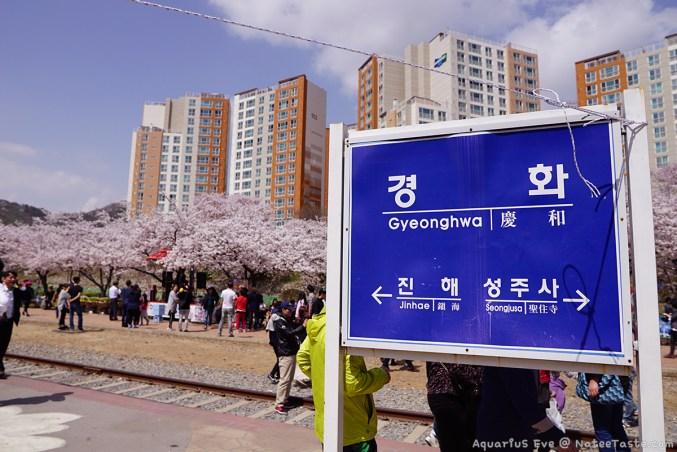 Jinhae-Cherry-Blossom-2018-Gyeonghwa-Station-03