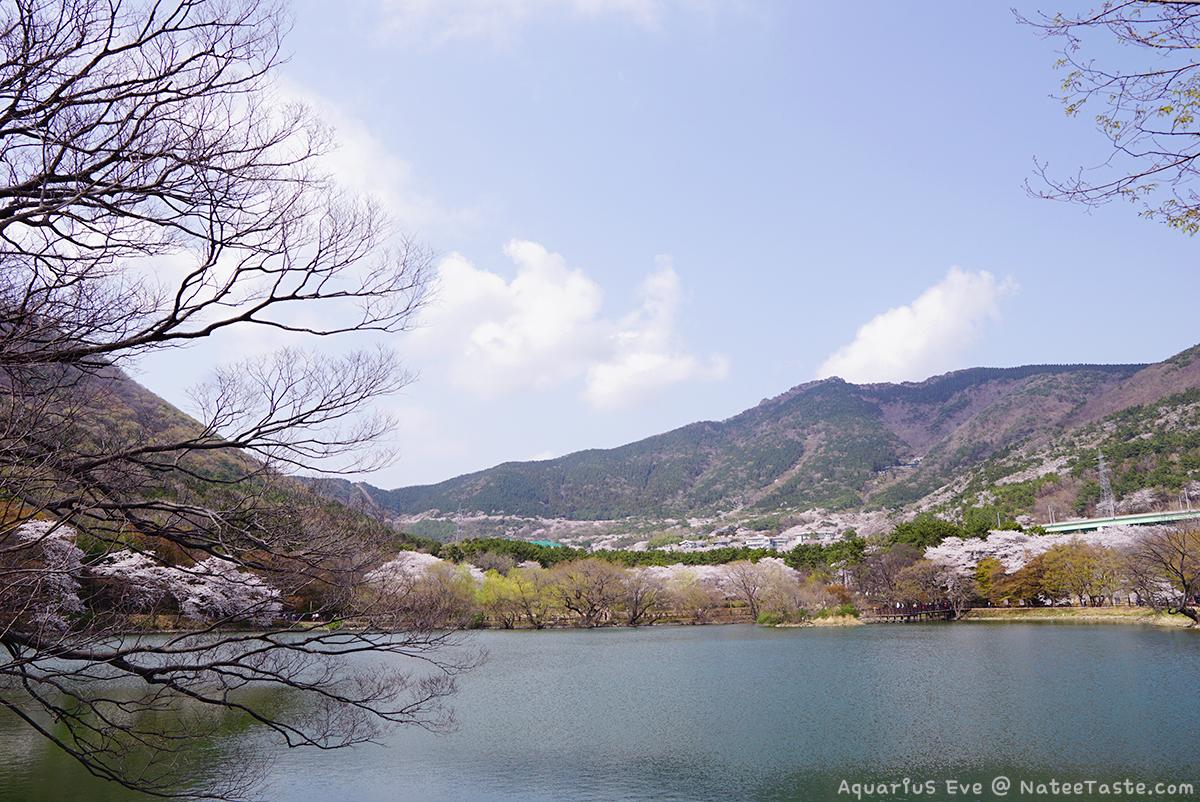 Jinhae-Cherry-Blossom-2018-Jinhae-NFRDI-Environment-Eco-Park-02