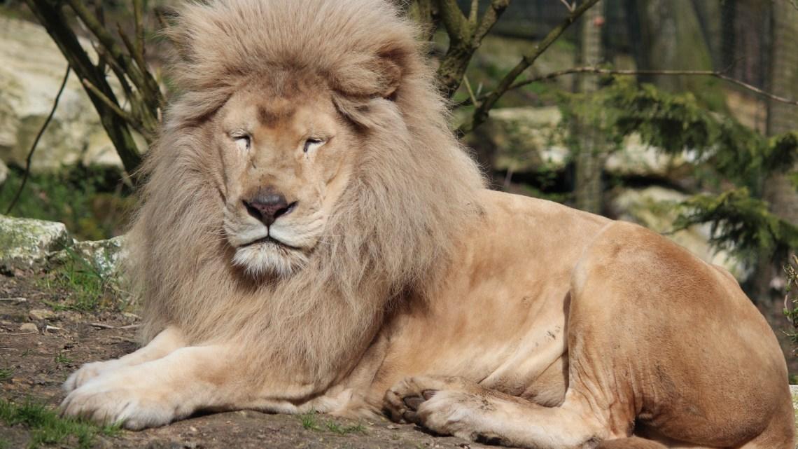 De grands moments au zoo de Beauval…
