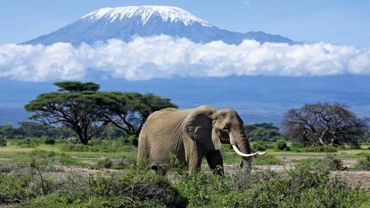 Notre futur projet, le Kilimandjaro 5895 m