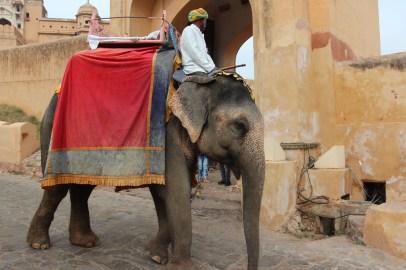 Les éléphants d'Amber