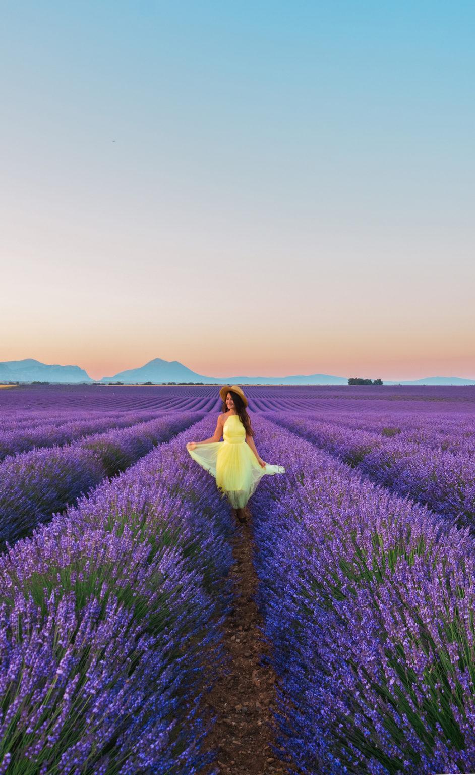 Sunrise and lavender field