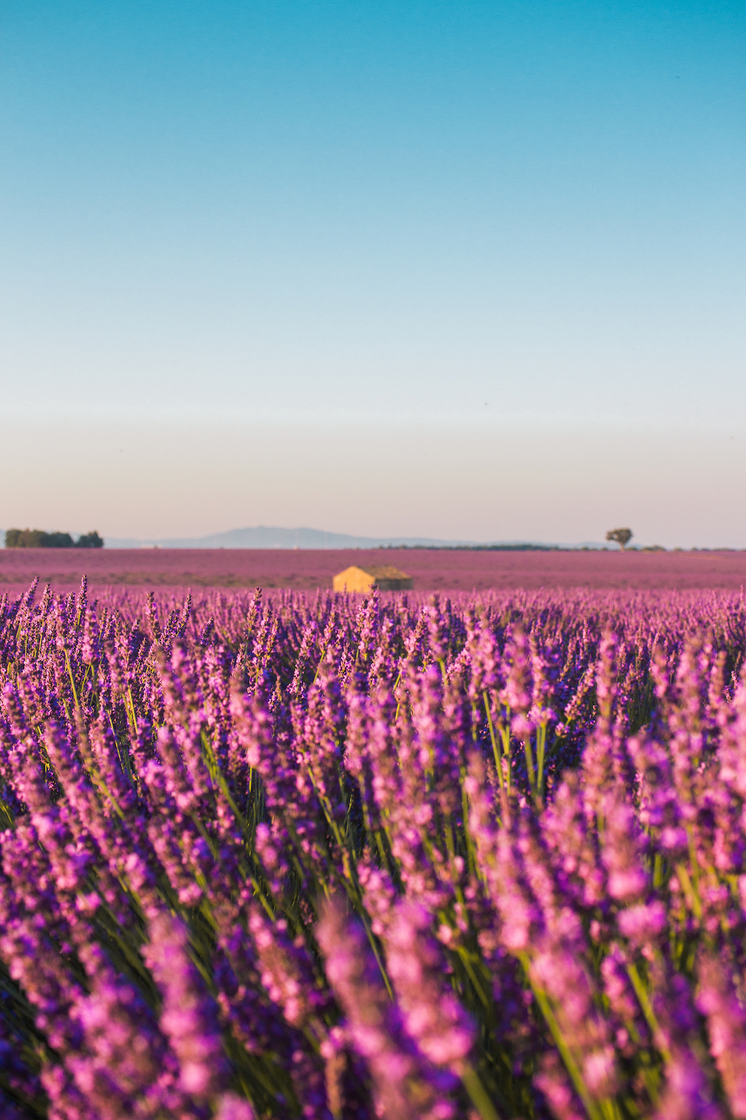 House in the lavender fields