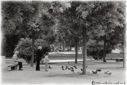Feeding pidgeons