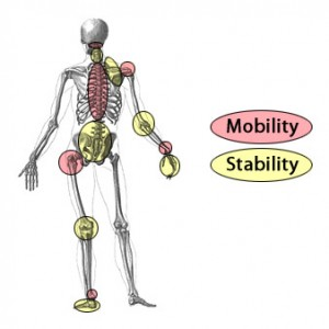 Joints of the body that need stability or mobility