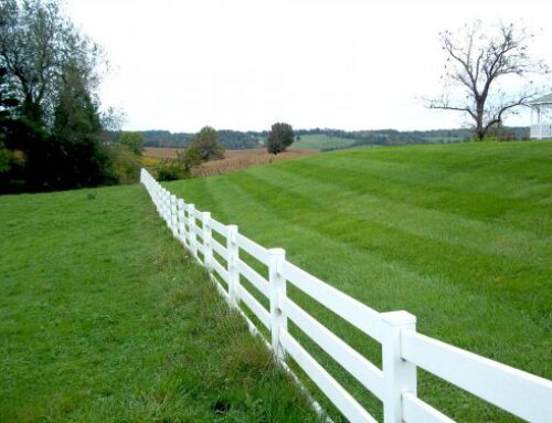 Grass is Greener Syndrome: The Internal Struggle