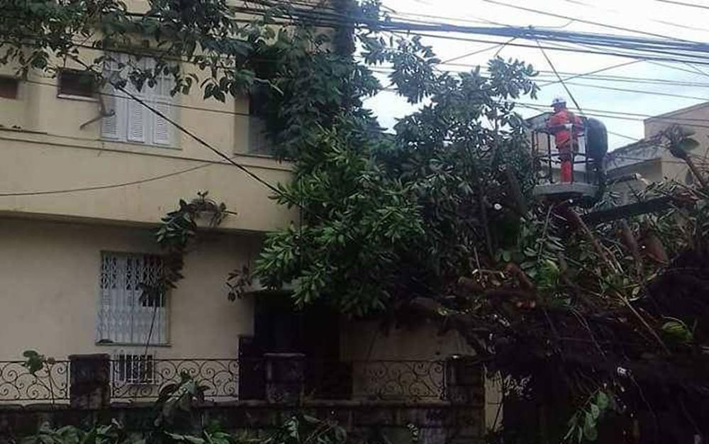 Árvore de grande porte cai sobre calçada e bloqueia acesso a prédio na Tijuca