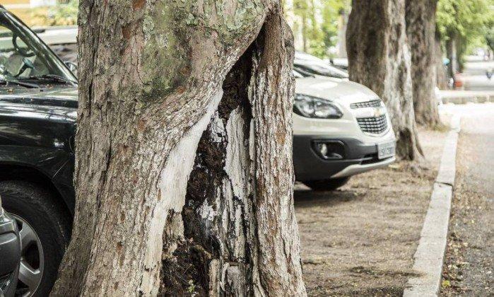 Árvores do Grajaú sofrem com falta de poda