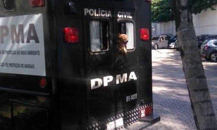 Polícia resgata sete cães vítimas de maus-tratos na Tijuca