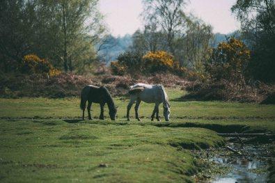 dartington weekend away_-15