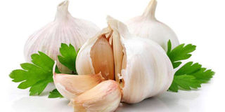 Growing Garlic From Soil To Market Nation