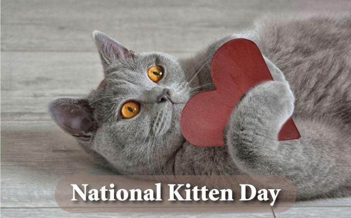 Kitten Day Images