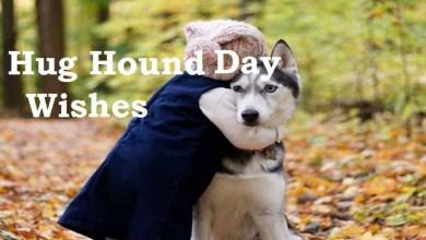 hug-your-hound-day Wishes