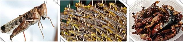 65 boiled locusts – iraq