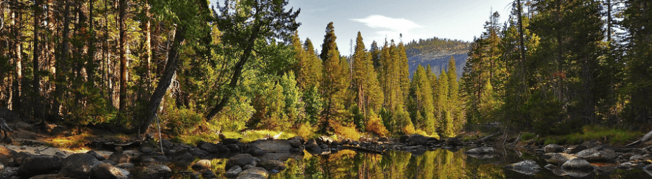 Native cypress trees are evergreen, coniferous trees that, in the u.s., primarily grow in the west and southeast. Plant Life Biomes Of The World Taiga