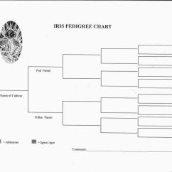 Simple Pedigree Diagram Ao Smith Century Ac Motor Wiring Blank Chart Template Business