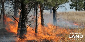 The Importance of Prescribed Burns