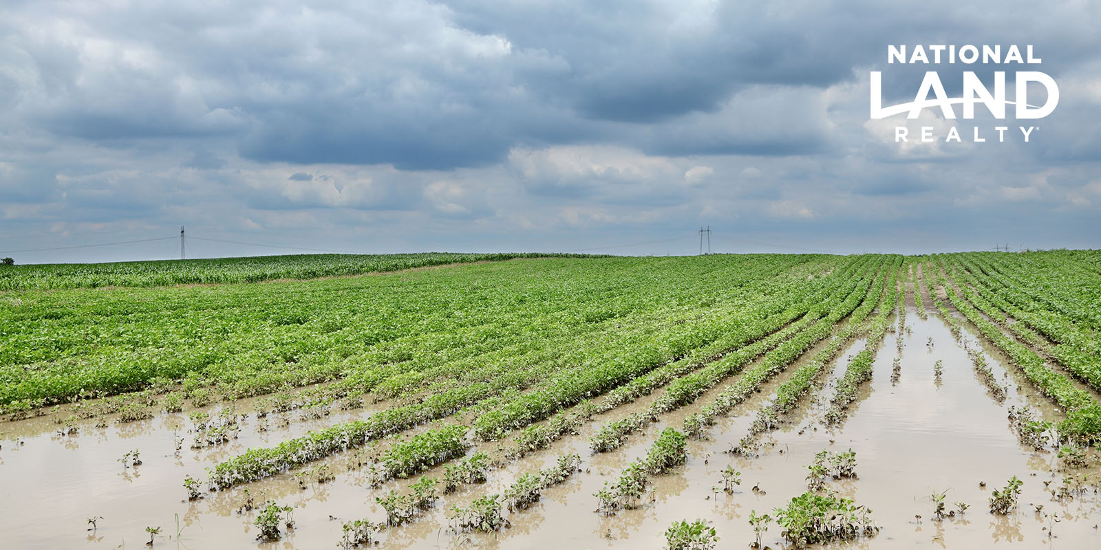 How to Keep Your Midwest Soil Thriving After a Flood