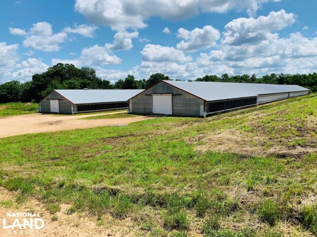 Curtain walls on chicken houses