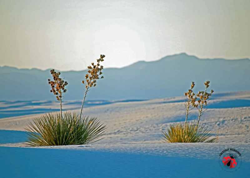 Looking to spend a day in White Sands National Monument? Check out our tips for making the most of your visit to the famed white sands.