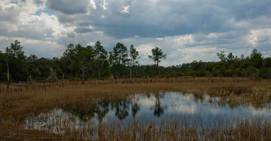 Dog info and rules Ocala National Forest