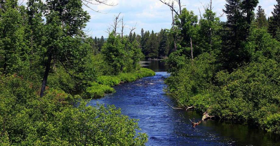 dog info and rules Chippewa national forest
