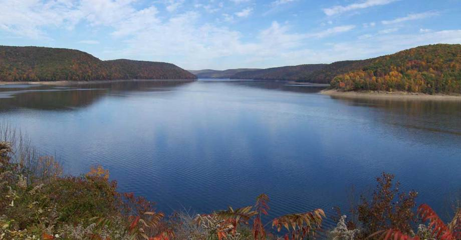 allegheny national forest dog pet info