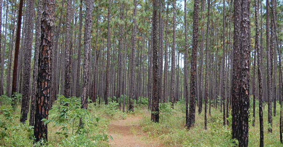 Francis Morion Sumter national forest dog pet info